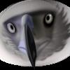 EagleEyed